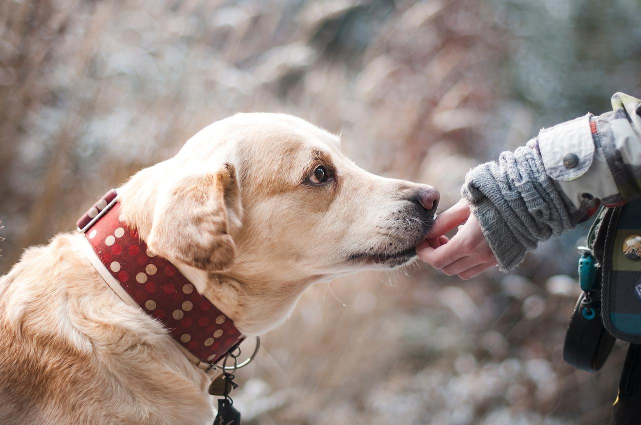 Starostlivosť a údržba srsti psa
